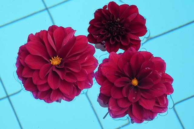 květy na hladině bazénu